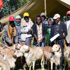 Integrated 'smart' packages the focus of next phase small ruminant value chain project inEthiopia