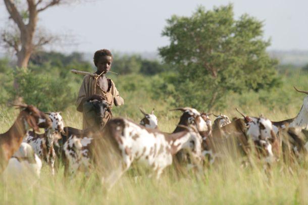 ILRI Livestock CRP rangelands