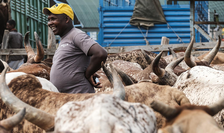 Livestock CRP GASL livestock Kenya