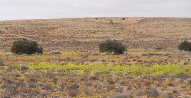 Rangelands Livestock CRP biodiversity